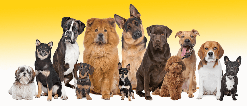 CanaDogs Breed Group