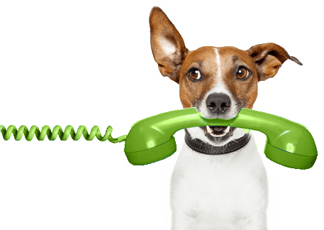 Dog on phone on CanaDogs: Canadian dog breeders