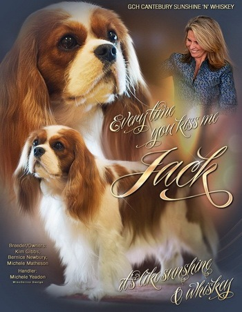 Cavalier King Charles Spaniels Adults Canada