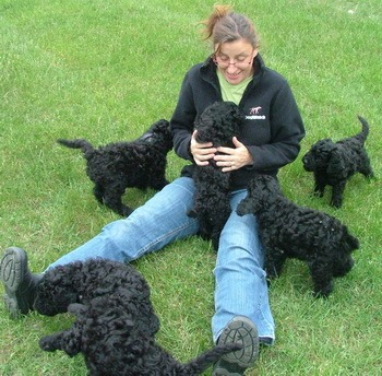 Barbet puppies CanaDogs